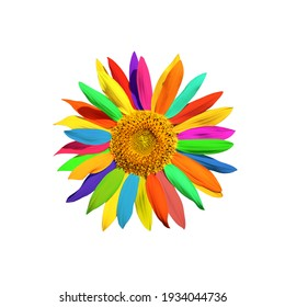 one bud sunflower with multicoloured  petals close-up, on white background, isolated