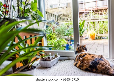 One calico cat lying down by plants by open door to backyard of house with garden