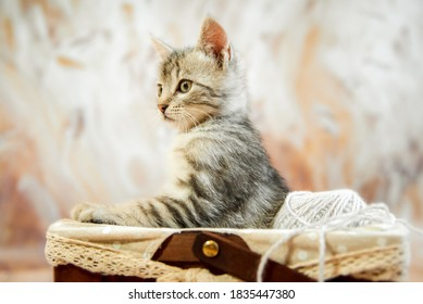 One cat, a gray striped young beautiful kitten in a basket with paws and looks away horizontal photo