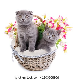 One cat stands and the other is sitting in a basket with flowers. Cats with decorations. Gray fluffy kittens on a white background