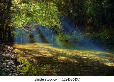 One of the cleanest water in the world flows under morning sunbeams and tree crowns through the oldest tropical rainforest.Emmagen Creek, Daintree National Park, Far North Queensland, Australia.Image.