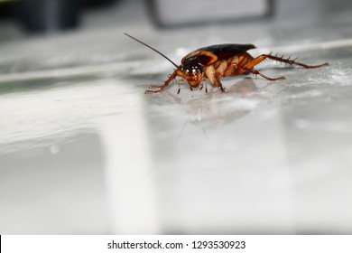 One cockroach is walking in the house.