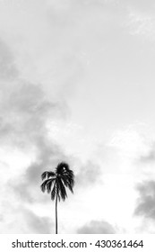 One coconut tree on the background sky