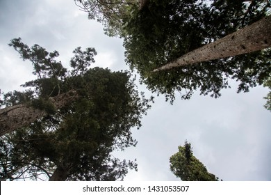 One day in the Mercadante forest, in southern Italy. A place immersed in greenery characterized by the presence of numerous conifers like the Aleppo pines, trees of the Mediterranean area.
