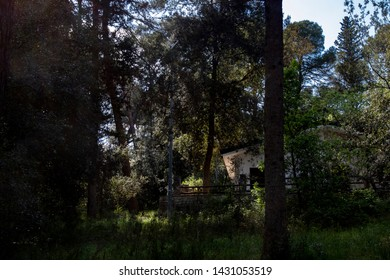One day in the Mercadante forest, in southern Italy. A place immersed in greenery and an old house surrounded by numerous conifers under the sunlight.