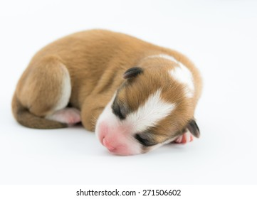 One day for newborn pup isolate on white background