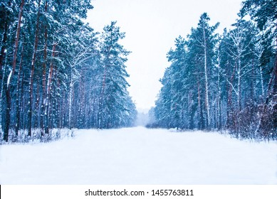 One day in snow the forest