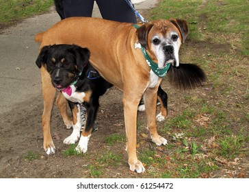 one dog standing underneath another dog
