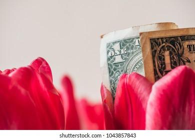 One dollar banknote inside beautiful tulip flower, Money in flowers