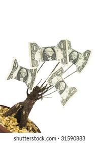 One Dollar Money Tree on a white background