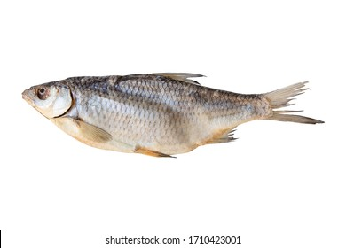 one dried fish on a white background for your menu design or bar advertisement