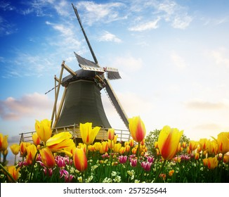 one dutch windmill over tulip flowers field in sunny day, Netherlands, retro toned