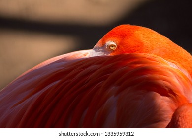 one eyed flaminggo