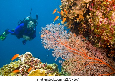 one female scuba diver viewing large orange-colored common gorgonian sea fan and variety of colorful coral of great barrier reef, australia