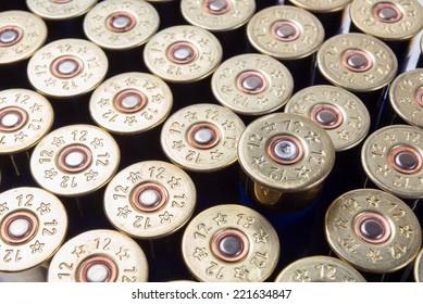One fired shotgun shell among unused ammo
