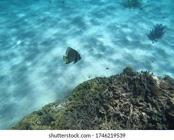one fish swimming near the sea bed in the great barrier reef in Australia taken with an underwater camera while snorkelling
