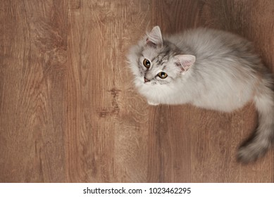 One fluffy cat playing on wooden floor above top view