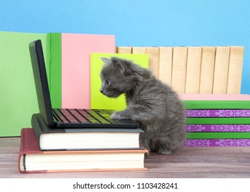 one fluffy cute small kitten sitting next to a miniature laptop computer on a desk of books with books behind, wood floor, blue wall background. Paw on keyboard looking at screen.