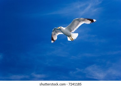 One flying seagull, blue sky