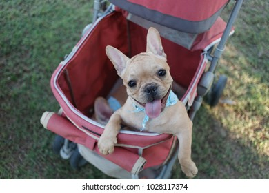 Cartoon Strollers Stock Photos Images Photography Shutterstock