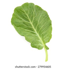 one fresh leaf of collard greens isolated on white
