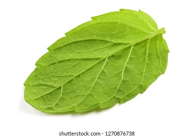 One fresh mint leaf isolated on the white surface