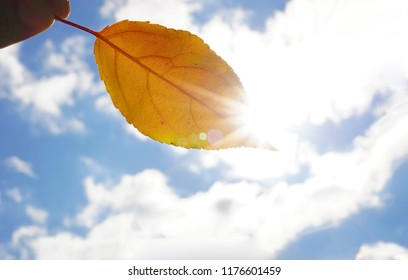 one fresh yellow leaf on sky with clouds background. sun rays beam.male hand holding  leaf against sunny autumn sky, fall time season. sunny day