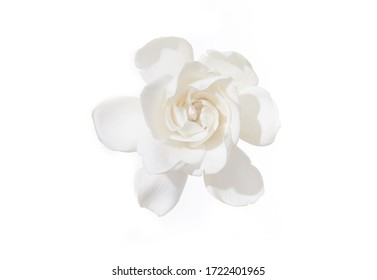 one gardenia head isolated over white background