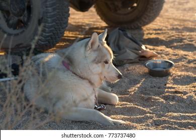 One good dog!