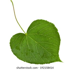 One green leaf shape heart close up isolated on white background
