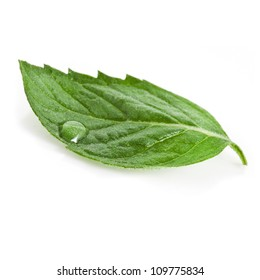 One green mint leaf with water drop close up isolated on white background