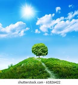 one green tree on blue sky