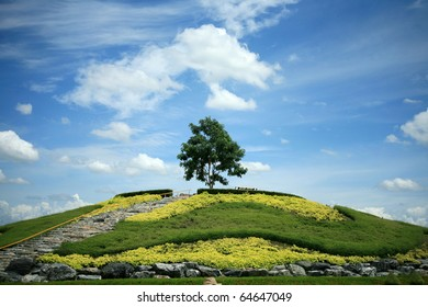 one green tree on slope