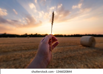 One Hand holds the straw in the against the light at sunset