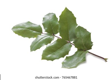 one hard elastic green leaf of a wild grape bush on a white background
