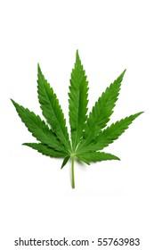 One hemp (marijuana) leaf isolated on white.