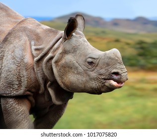 One Horned Rhinoceros. Close up photo. Amazing portrait of an awesome rhino. Wildlife of a National Reserve. Wild powerful animals in National Parks.