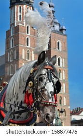 one horse in cariage