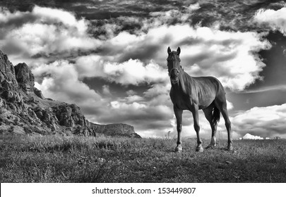 One horse looking in camera. Mountains on background