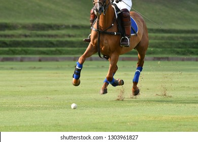 One Horse Player Riding To Control The Ball.