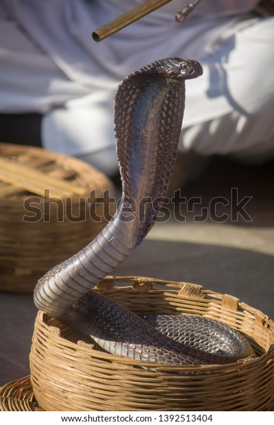 One India Cobra Basket Snake Charmer Stock Photo (Edit Now