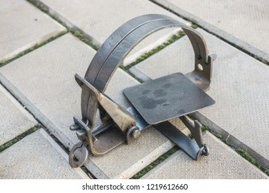 One iron trap lying on the stone floor, not cocked