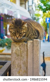 One of Istanbul's many street cats in the Moda neighbourhood of Kadikoy on the Asian side of the city - Shutterstock ID 1986815594