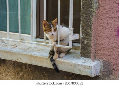One of Istanbul's many street cats on a windowsill in the Moda neighbourhood of Kadikoy on the Asian side of the city - Shutterstock ID 2007830351