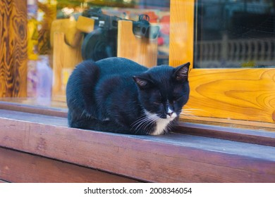 One of Istanbul's many street cats on a windowsill in the Moda neighbourhood of Kadikoy on the Asian side of the city - Shutterstock ID 2008346054
