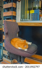 One of Istanbul's many street cats sleeps on a chair ourside a bar in the Moda neighbourhood of Kadikoy on the Asian side of the city - Shutterstock ID 2011902797