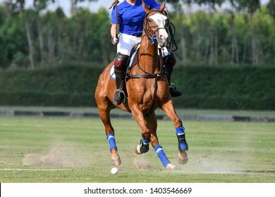 One Ladies horse polo player use a mallet hitting a ball in tournament.