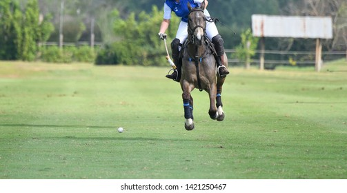 One Lady Polo Pony Player Riding To Control The Ball.