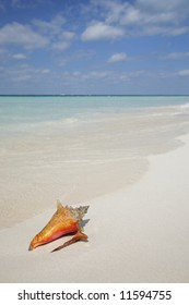 One of a large series. Tropical conch on a beautiful beach.