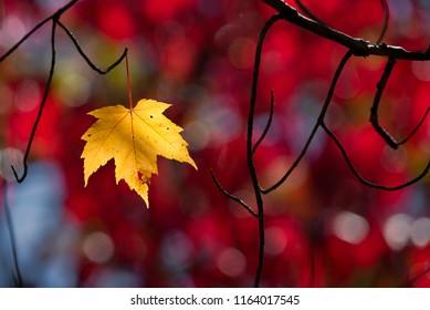 One last leaf holding on